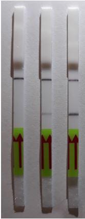 Paper strips_Biosensor
