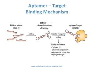 aptamers-new-class-of-oligonucleotide-for-therapeutic-and-diagnostic-use-6-638